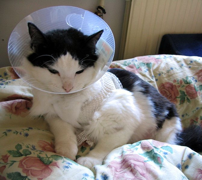 671pxcat_with_elizabethan_collar